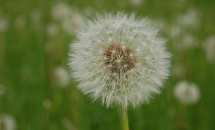 Illustration alerte allergies